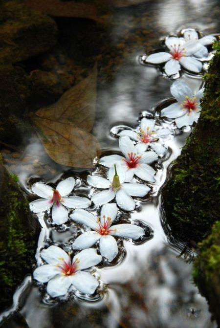 blossomflow